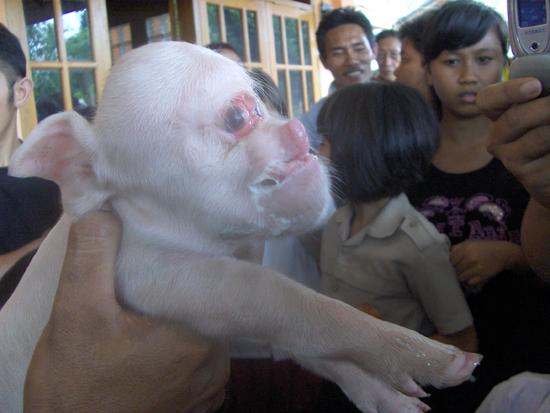 Hideous Piglet Wild-a-Beast - Live At Hernando's Hideaway