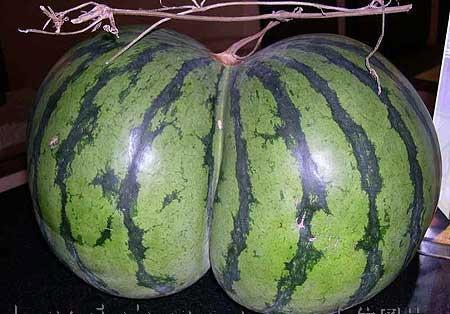 Watermelon viagra effect
