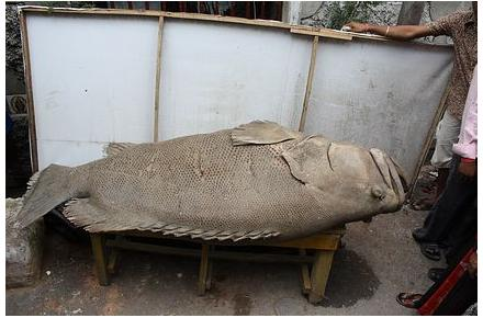 ancientfish