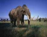 Woolly mammoth's secrets points toward new artificial blood for humans