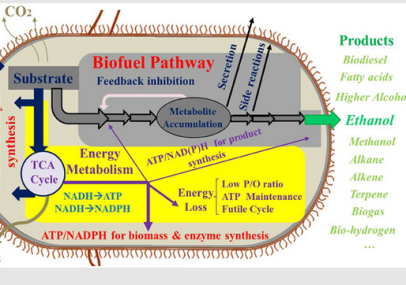 biofuelpathway