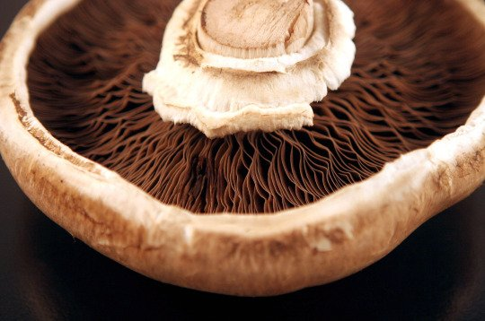Mandatory Credit: Photo by Day Massey/Keystone USA/REX Shutterstock (629790d) The Portobello mushroom (sometimes portobella) is a large brown strain of the same button mushroom fungus, left to mature and take on a broader, more open shape before picking. Various - 2006