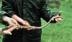 bigworm