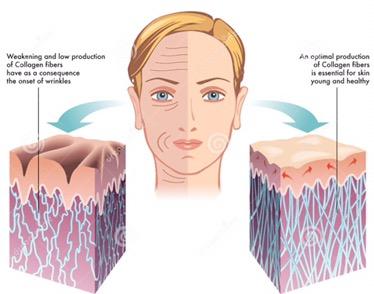 Regeneration of human skin, a step closer