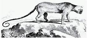 Xenothrix, A Strange Extinct Rat-legged Tree Monkey