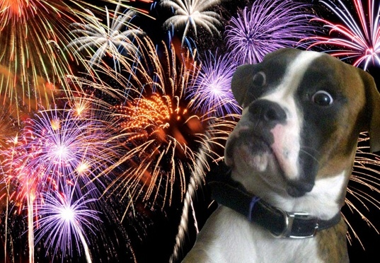 Sound Alternatives to Dog Anxiety Meds for Fireworks