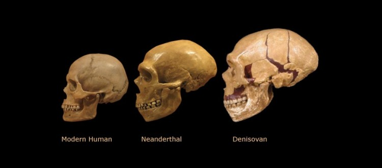 Were Denisovans Bigger And Stronger Than Neanderthal